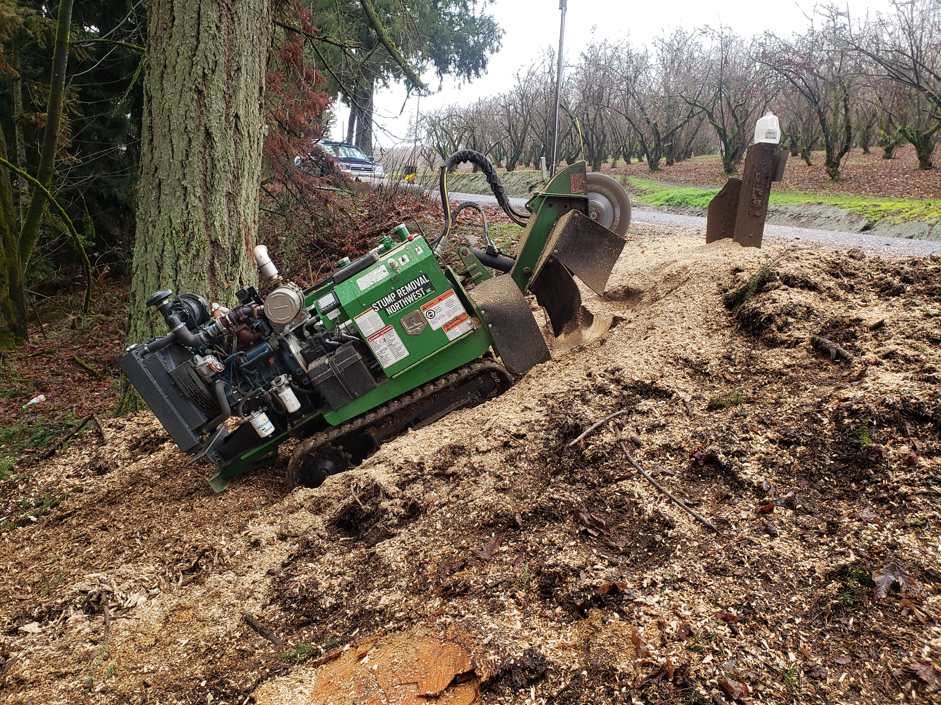 beaverton stump grinding